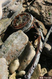 dag 3 restanten van een eend op het strand