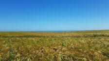 dag 1 - tussen arromanches en port en bessin