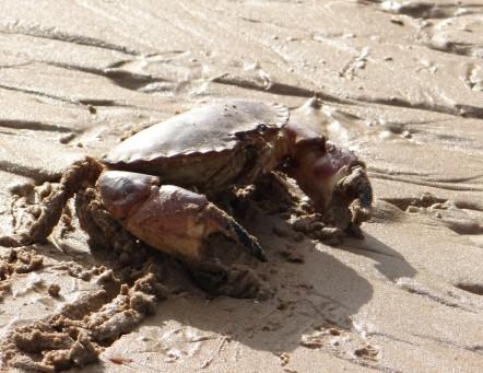 dag 3 - ontmoeting op omaha beach